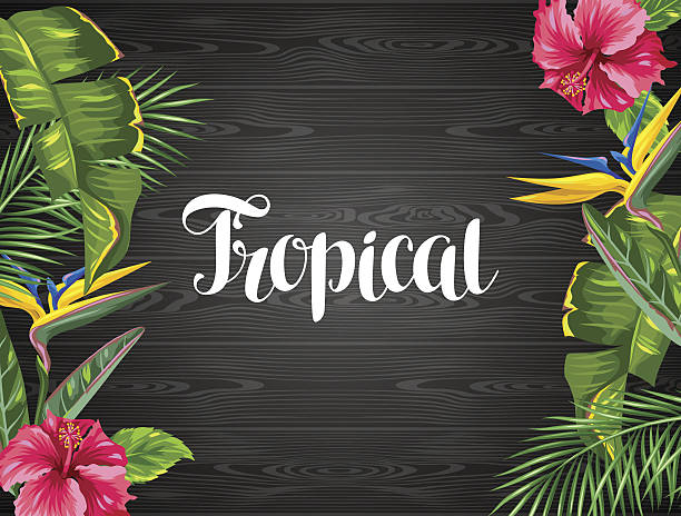 invitation card with tropical leaves and flowers. palms branches, bird - hibiskusgarten stock-grafiken, -clipart, -cartoons und -symbole