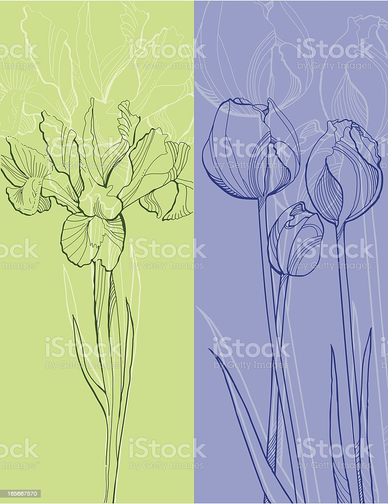 Iris and Tulips royalty-free stock vector art