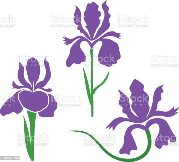 Iris flower stylized vector id649373258?b=1&k=6&m=649373258&s=612x612&h= peaev8edf3apneqgo2lq60slll7btrd vqzm2zcylw=