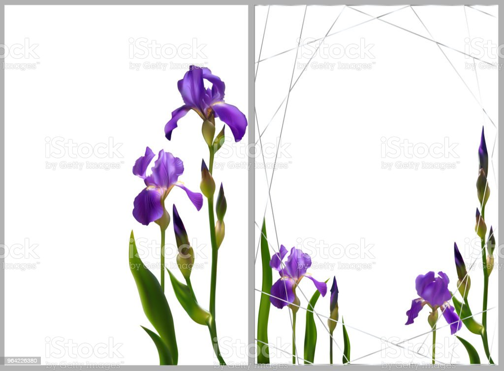 Ilustración de Iris Flores Fondo Floral Frontera Brotes Azul Pétalos ...