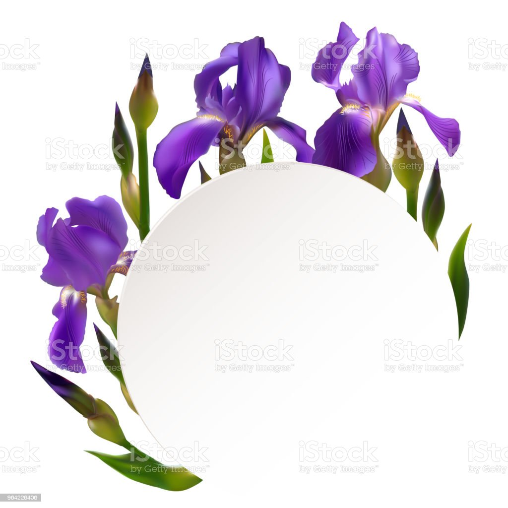 Iris Flowers Floral Background Border Buds Blue Petals Flower