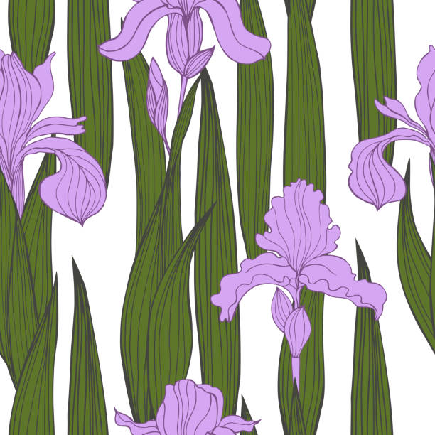 stockillustraties, clipart, cartoons en iconen met iris bloemen. vector naadloos patroon. - iris plant