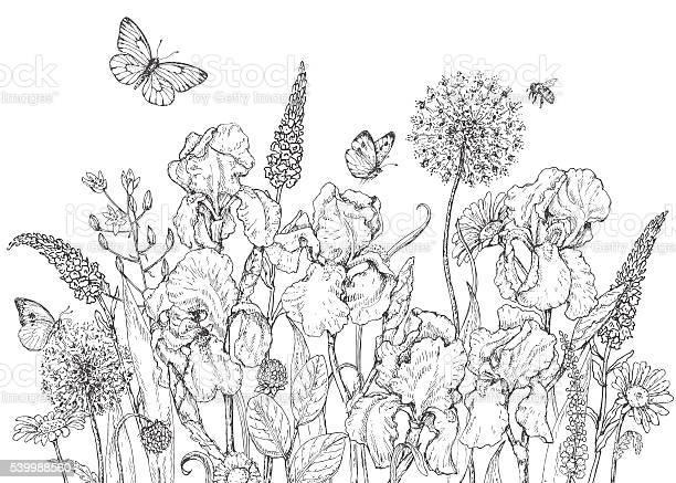 Iris wild flowers and insects sketch vector id539988560?b=1&k=6&m=539988560&s=612x612&h=iflgs6o7f0rjpojxaiicjluotxaqqvszrbnve28lqyu=