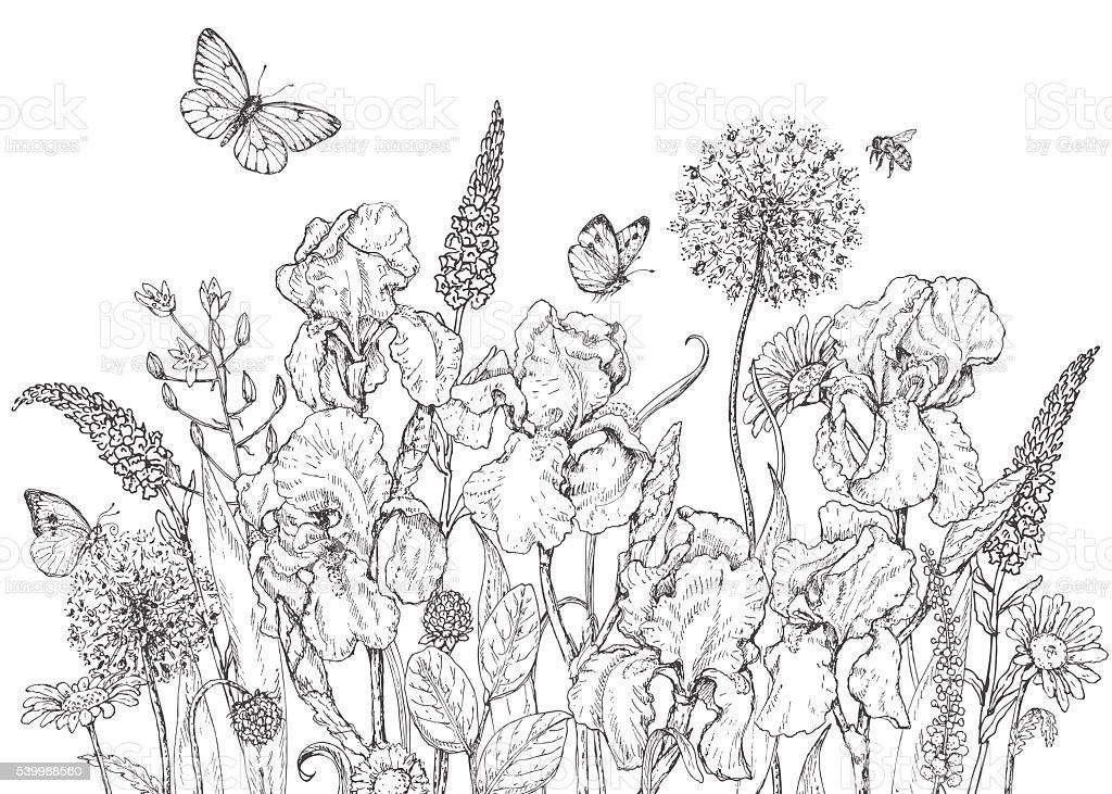 Iris, wild  flowers and insects sketch – Vektorgrafik
