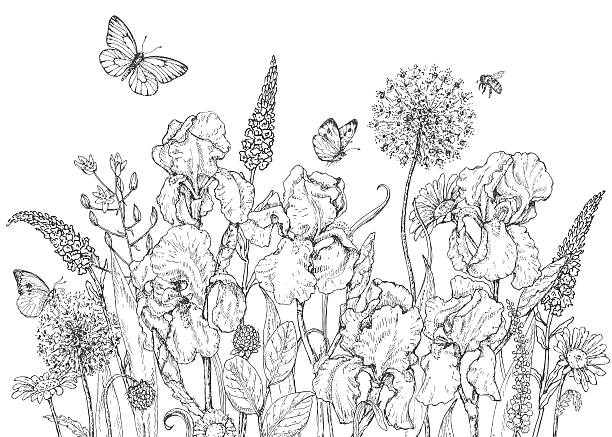stockillustraties, clipart, cartoons en iconen met iris, wild  flowers and insects sketch - iris plant
