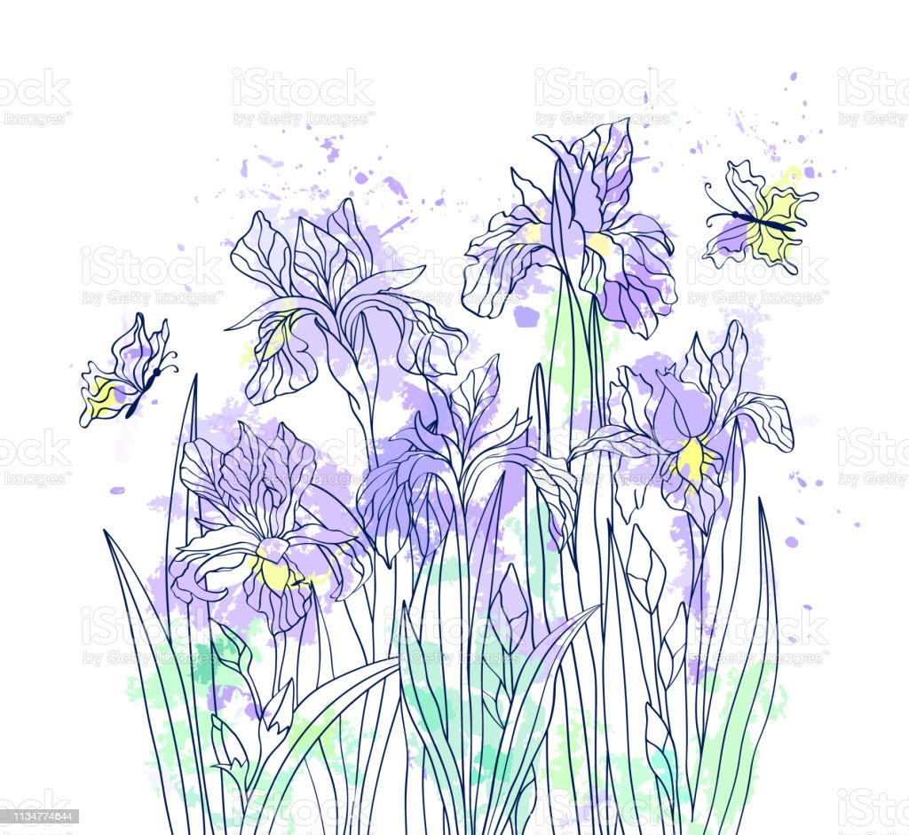 Irises Butterflies On Watercolor Background Floral Greeting Card