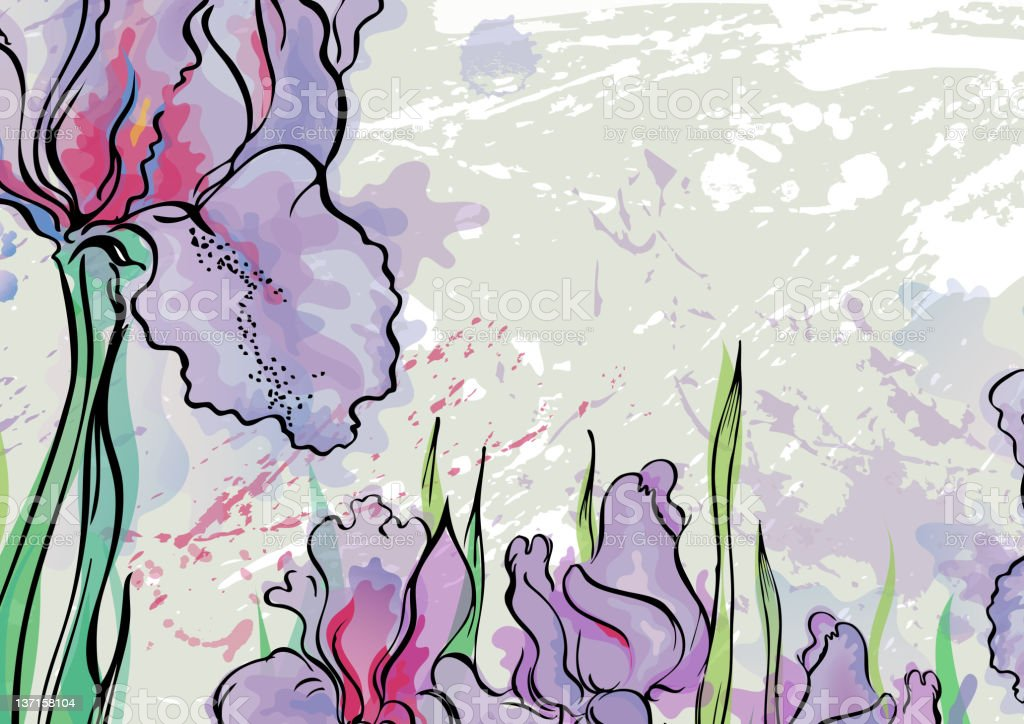 Irises royalty-free stock vector art
