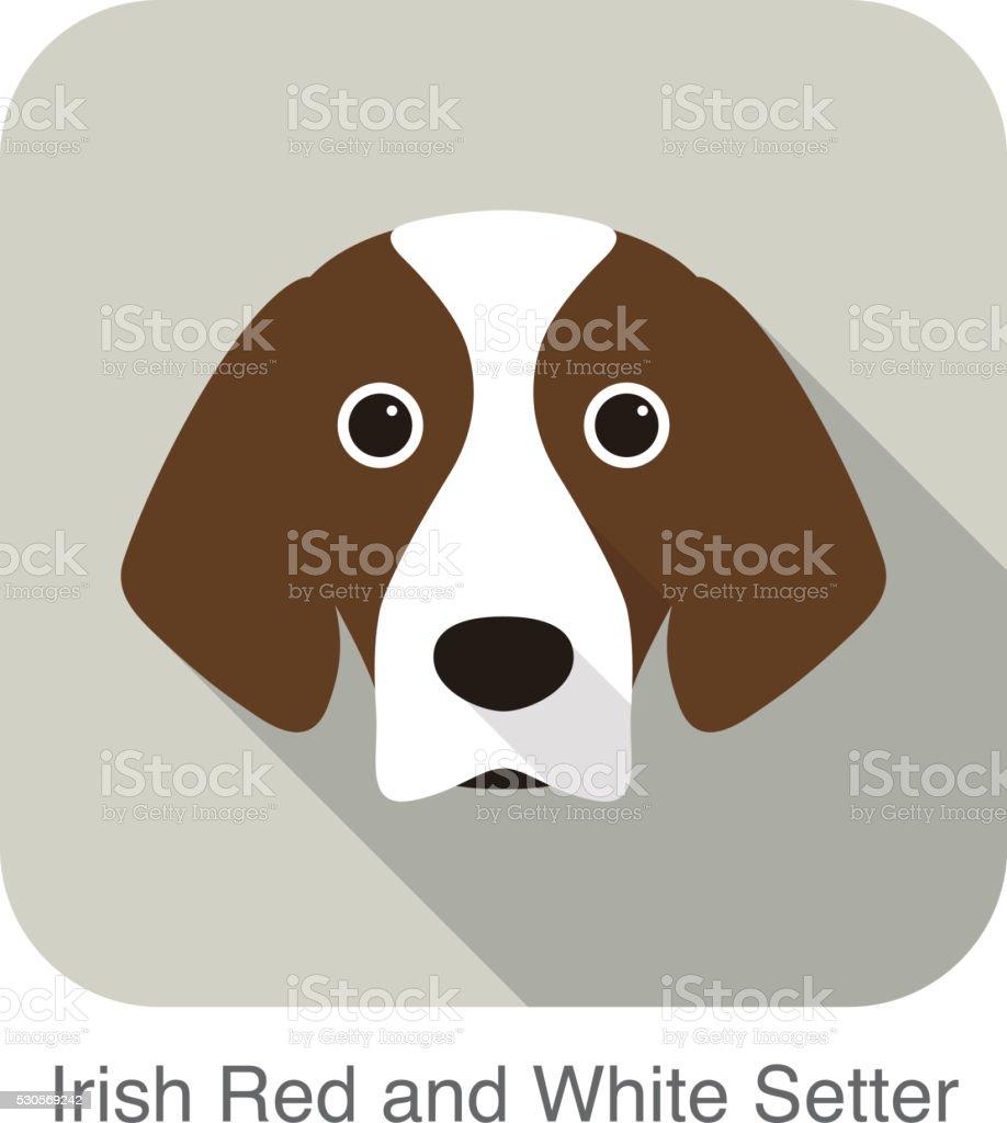 Irisch Rote Und Weiße Setterterrier Hund Gesicht Porträt Stock ...