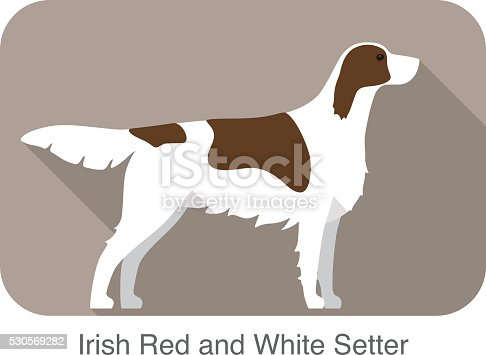 Irish red and white setter terrier standing and watching, side, dog cartoon image series