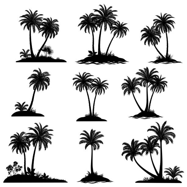 islands with palm trees silhouette - palm tree stock illustrations