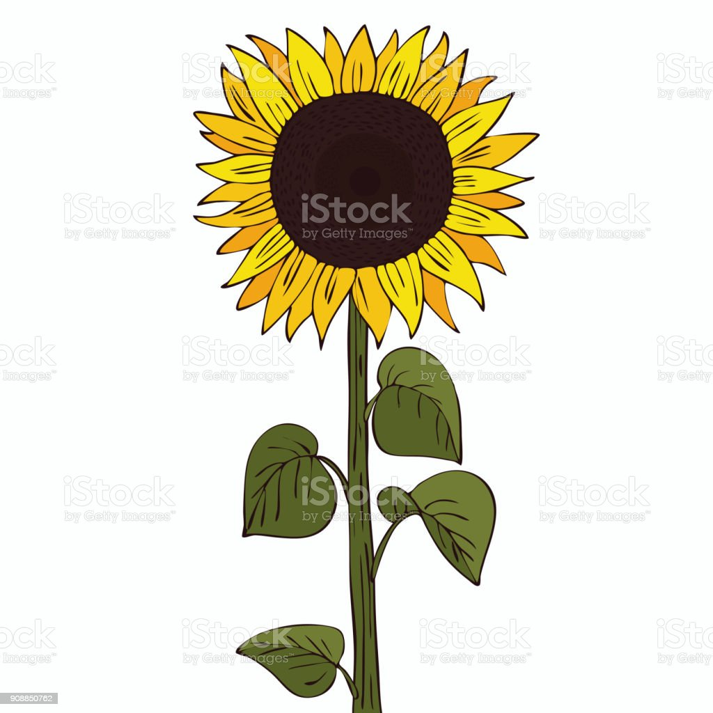 royalty free common sunflower clip art vector images rh istockphoto com clip art sunflowers free clip art sunflowers free
