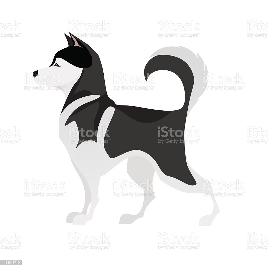 Isolated adorable black and white young Husky vector art illustration