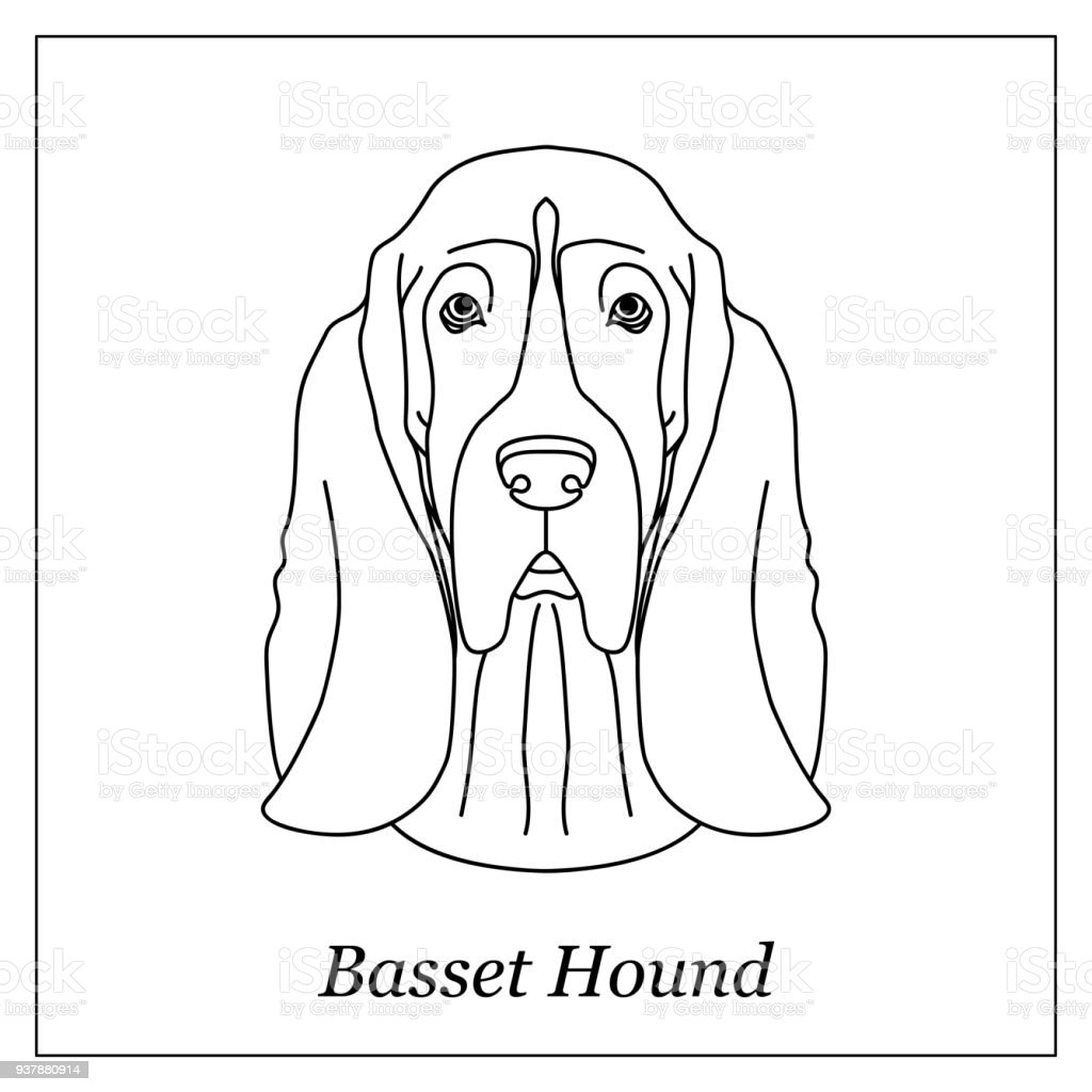 Isolated Black Outline Head Of Basset Hound On White Background Line ...