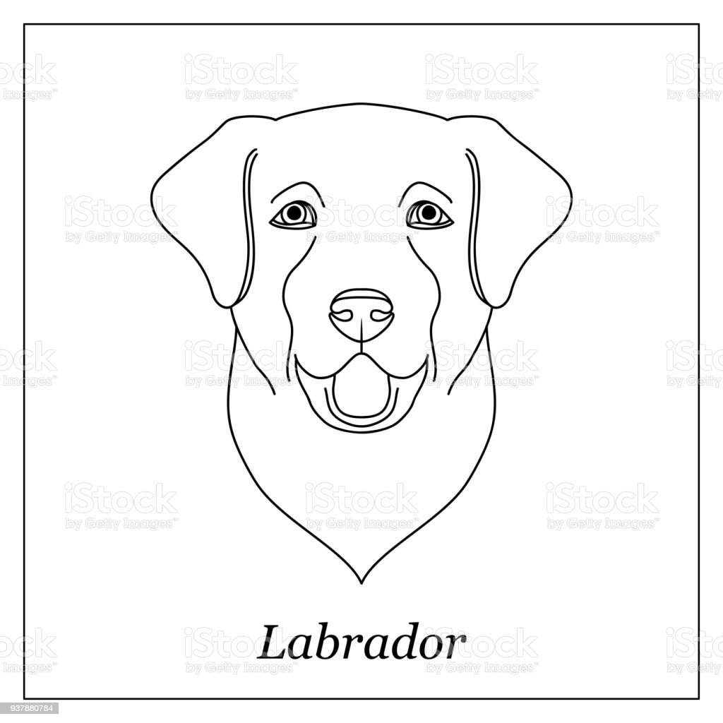Isolated Black Outline Head Of Happy Labrador Retriever On White ...