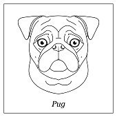 Isolated black outline head of pug dog, mops on white background. Line cartoon breed dog portrait
