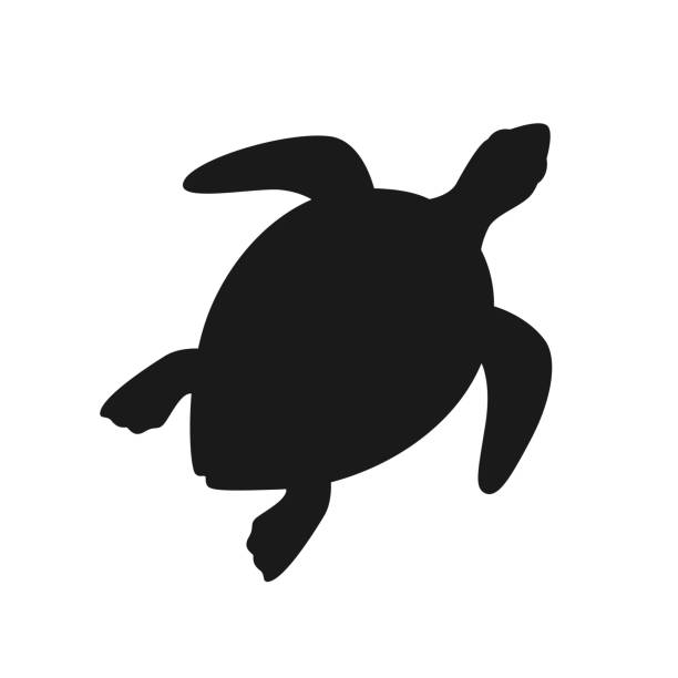 illustrazioni stock, clip art, cartoni animati e icone di tendenza di isolated black silhouette of marine green turtle on white background. top view. view from above. - tartaruga