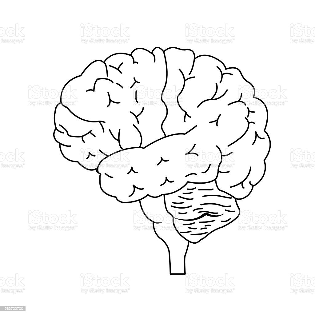 Isolated Brain Side View Stock Vector Art & More Images of Anatomy ...