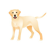 Isolated colorful happy standing labrador retriever on white background. Color flat cartoon breed dog