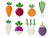 isolated cute simple root vegetables like carrot red beet turnip onion garlic turnip fennel parsnip malanga etc. vector design.
