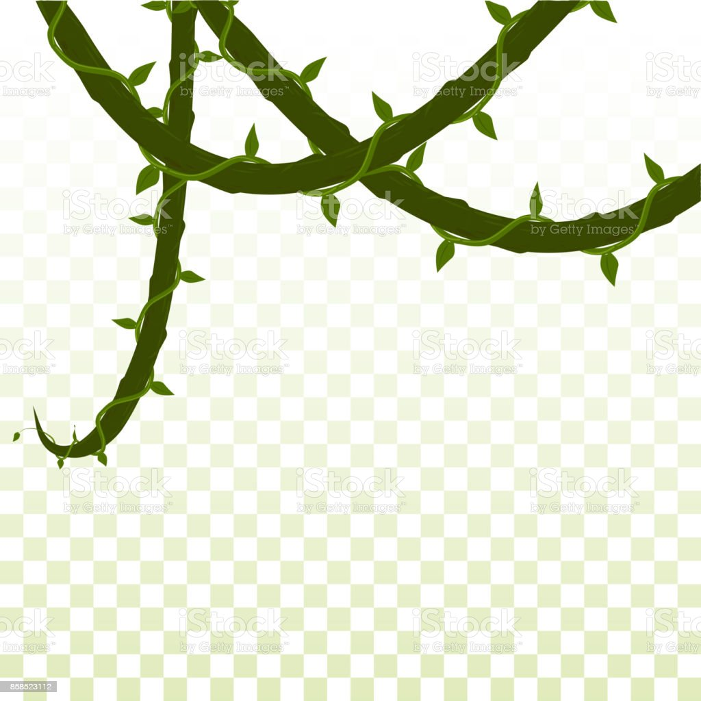 royalty free hanging vines clip art vector images illustrations rh istockphoto com vines clipart png vine clipart free