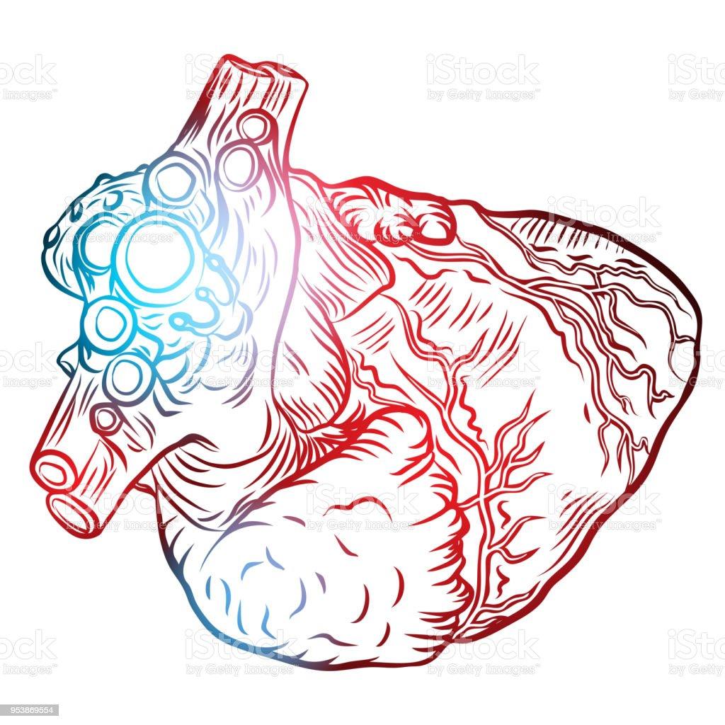 Isoliert Gravur Bunt Rot Blau Fleisch Tattoo Konzept Anatomische ...