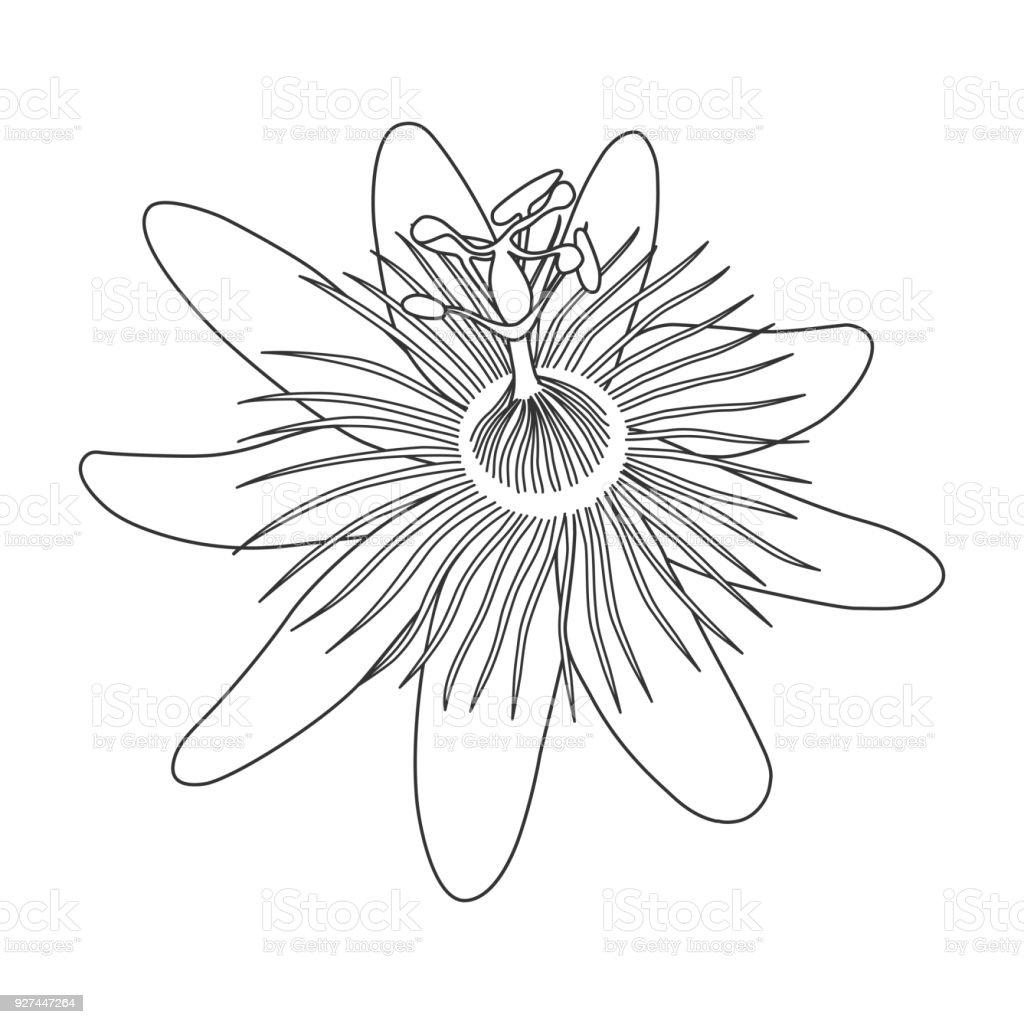 Izole El çarkıfelek Passiflora Beyaz Arka Planda Siyah Anahat Tek