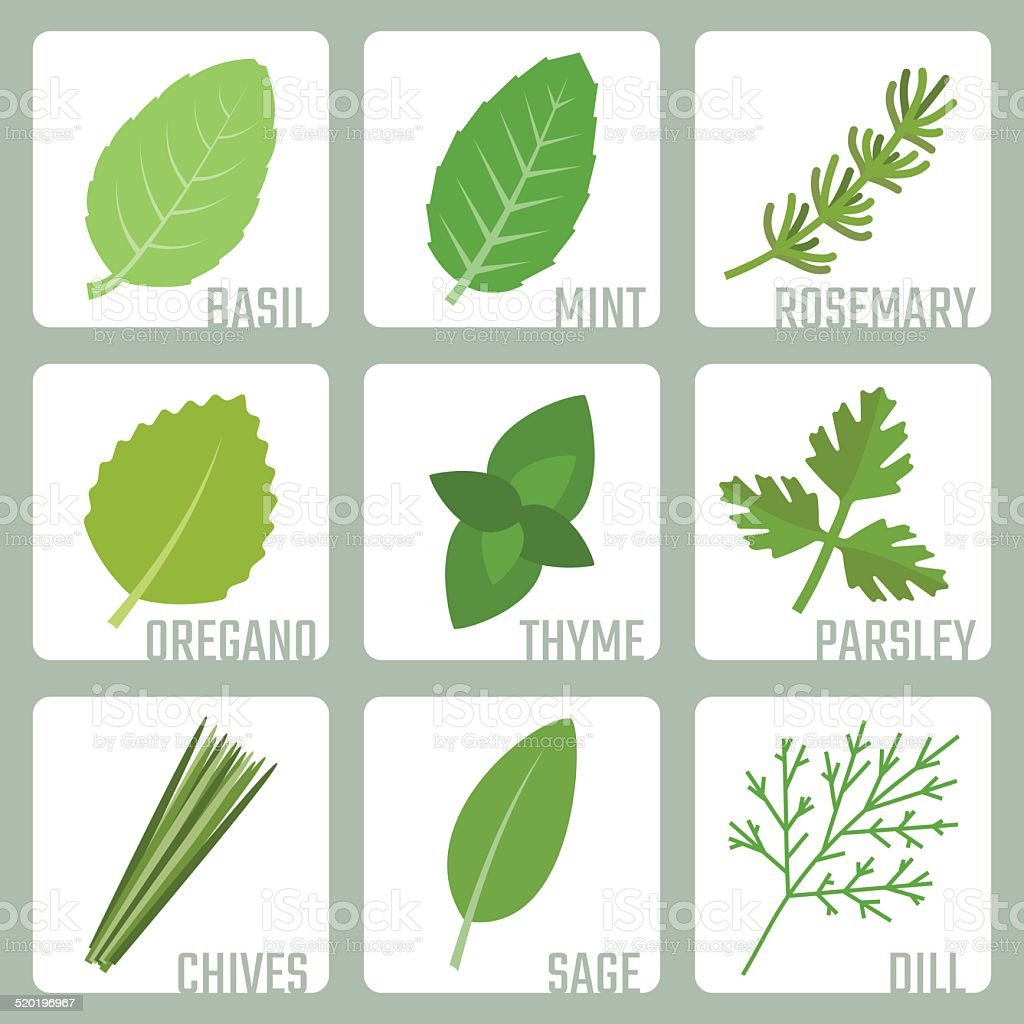 Isolated herbs vector icons set vector art illustration