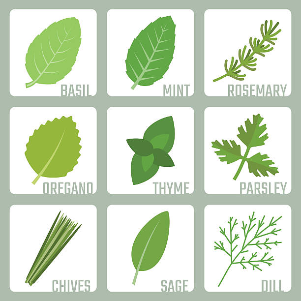 Isolated herbs vector icons set Isolated herbs vector icons set basil stock illustrations