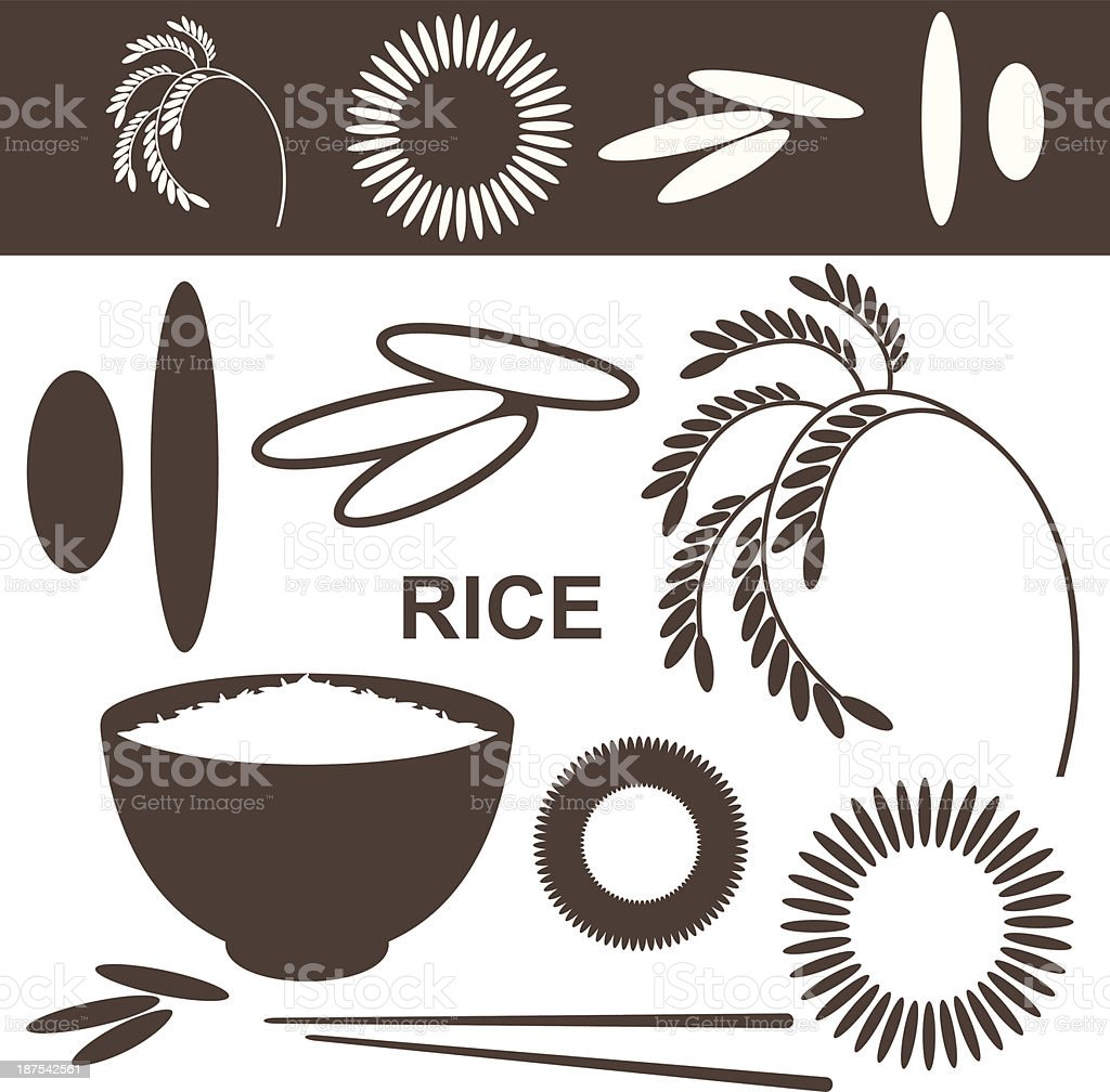Isolated images of rice in its various forms vector art illustration