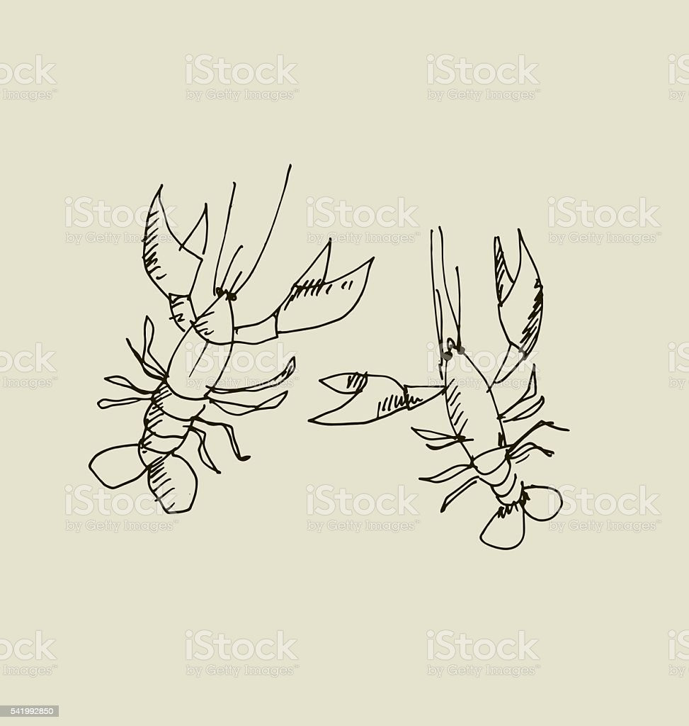 isolated lobster image. vector art illustration