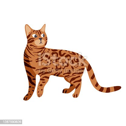 istock Isolated on white bengal cat vector illustration. 1287590626