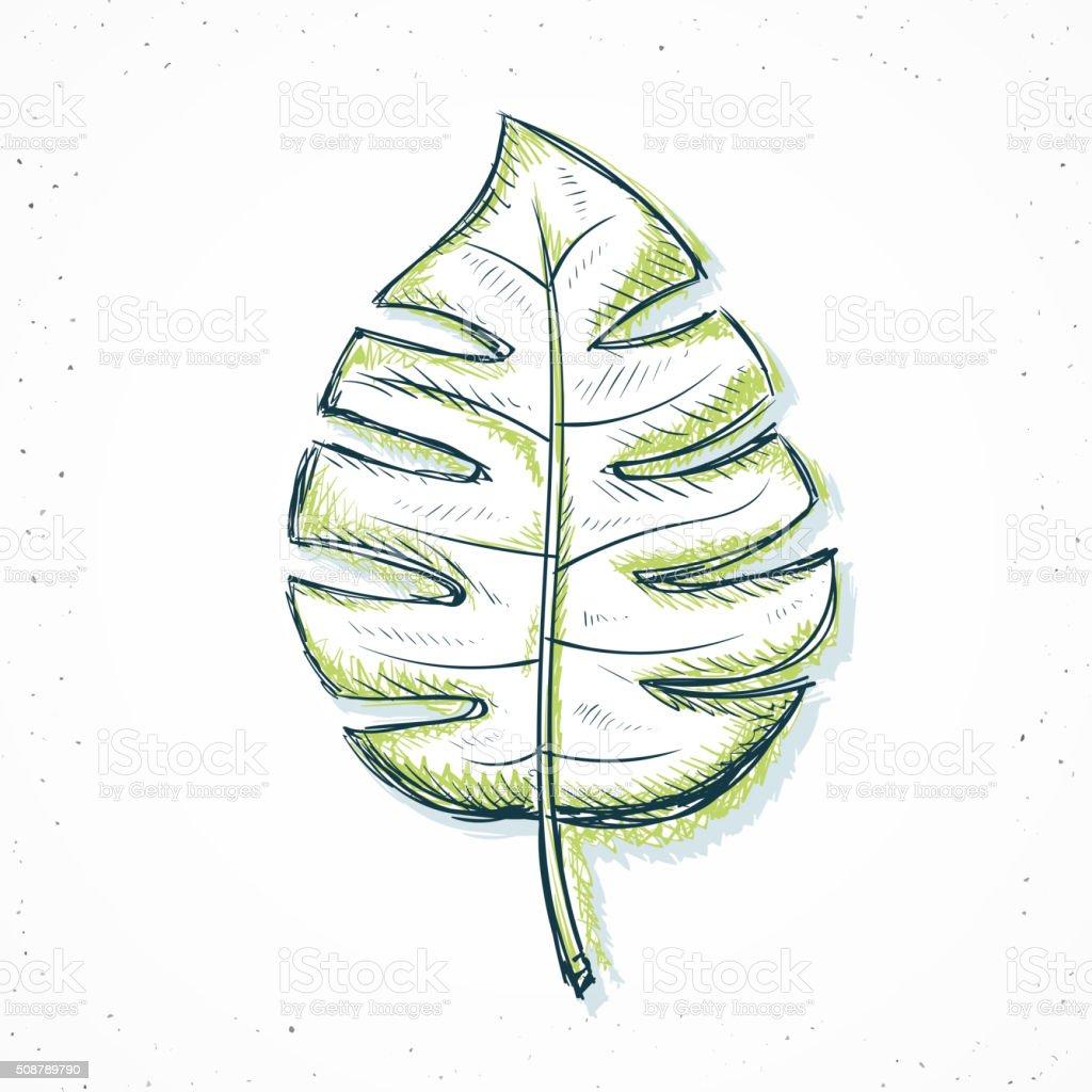 feuilles de palmier isol de style dessin la main feuilles de palmier isol de style - Dessin De Feuille