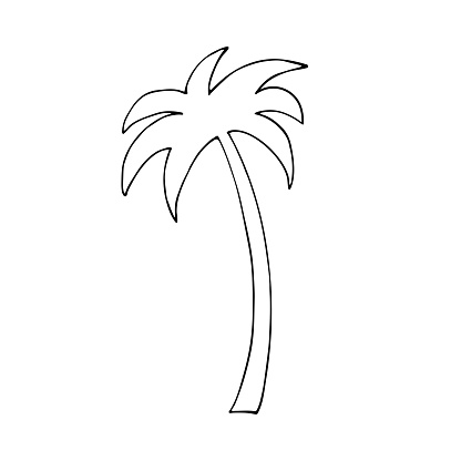 Isolated palm tree on a white background.