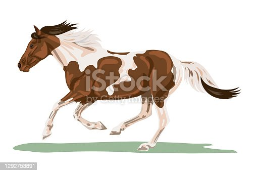 istock Isolated Pinto Horse Galloping 1292753891