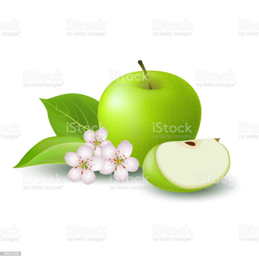 Isolierte realistische farbige grüner Apfel Slice und ganz saftige Frucht mit weißen Blumen, grüne Blätter und Schatten auf weißem Hintergrund. – Vektorgrafik