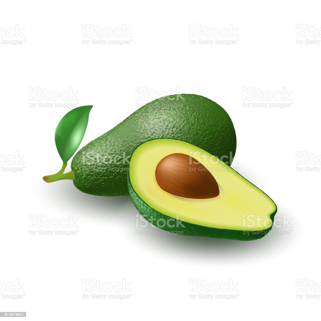 Isolated realistic colored whole juicy avocado with stick and green leaf and half avocado with pit with shadow on white background. Side view. vector art illustration