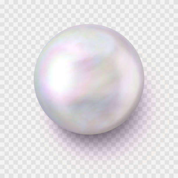 Isolated Realistic Single Shiny Pearl with a Shadow on Transparent Background vector art illustration