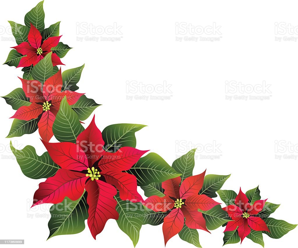 isolated red poinsettia flowers corner elements isolated on white