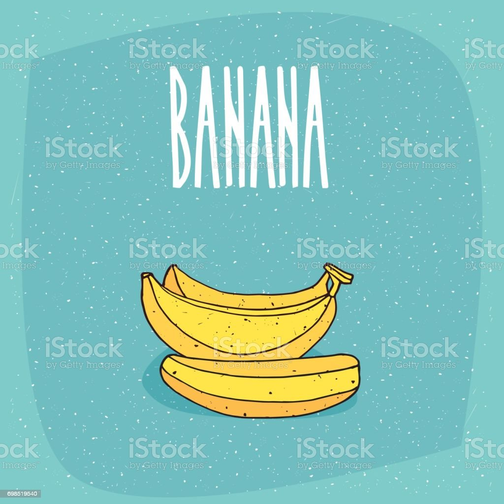 Isolated ripe and whole bananas fruits vector art illustration