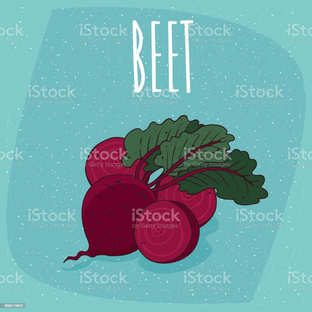 Isolated ripe beetroot fruits or beet vector art illustration