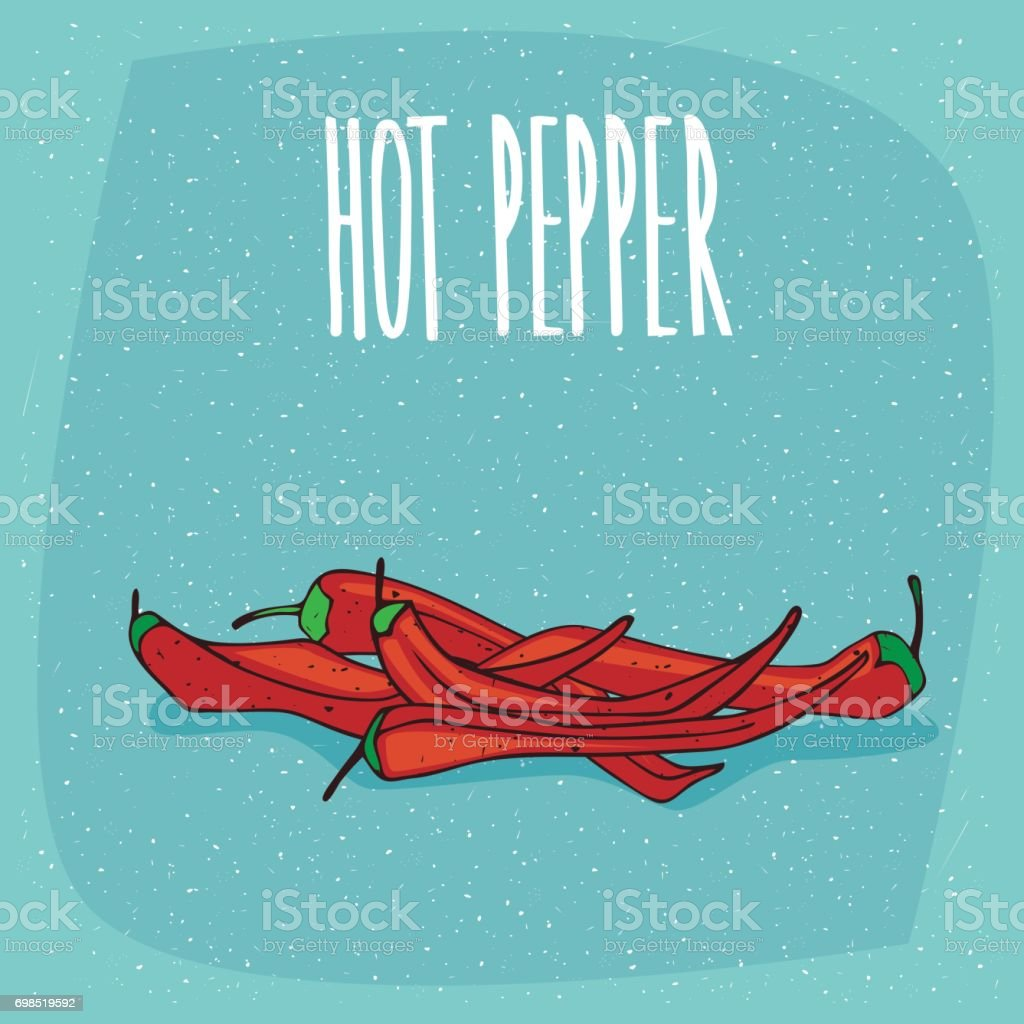 Isolated ripe capsicum fruits or red hot pepper vector art illustration