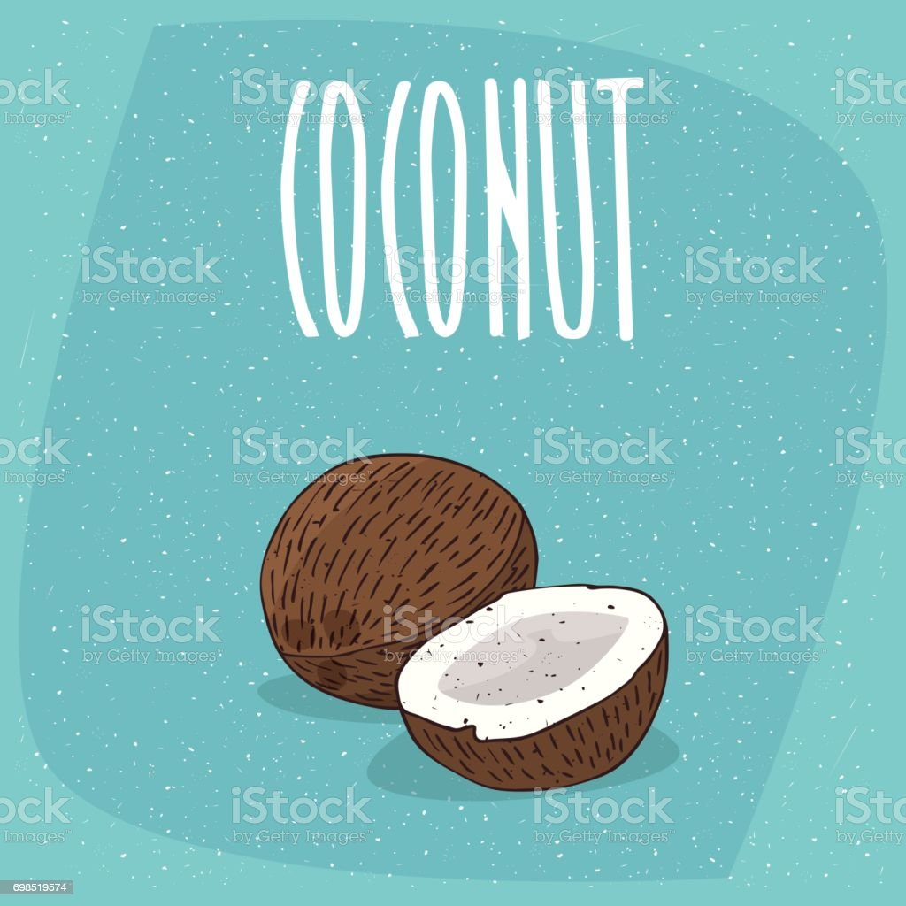 Isolated ripe coconut fruits whole and piece vector art illustration