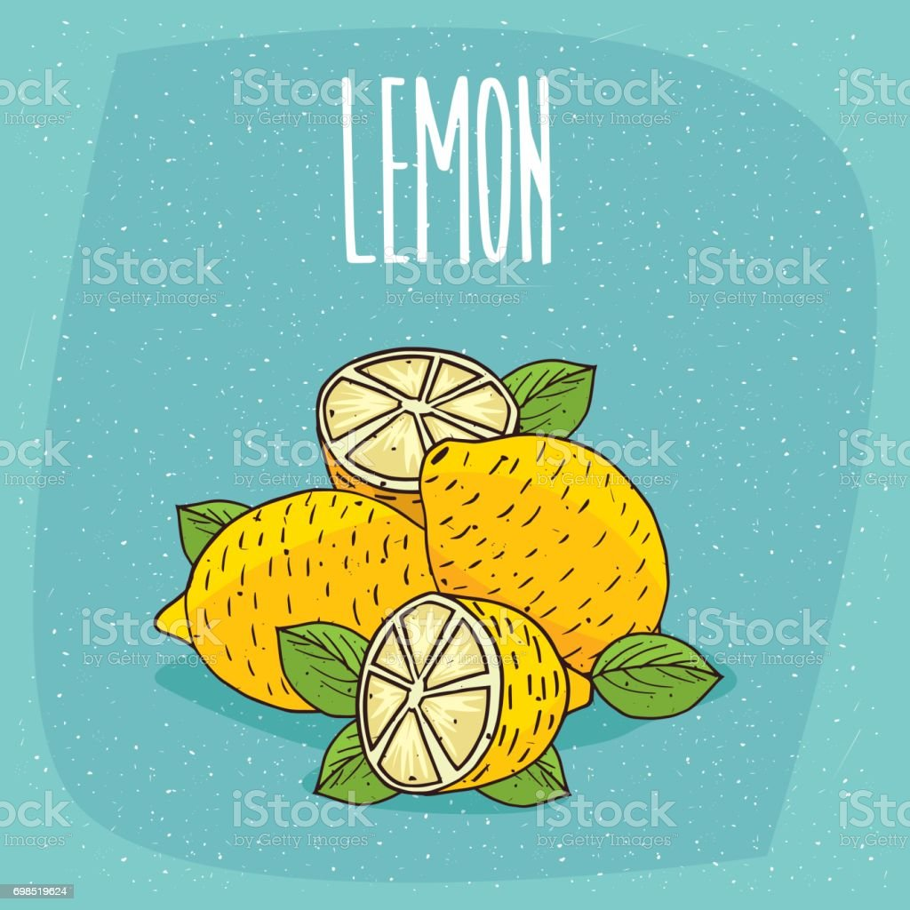 Isolated ripe lemons fruits whole and cut vector art illustration