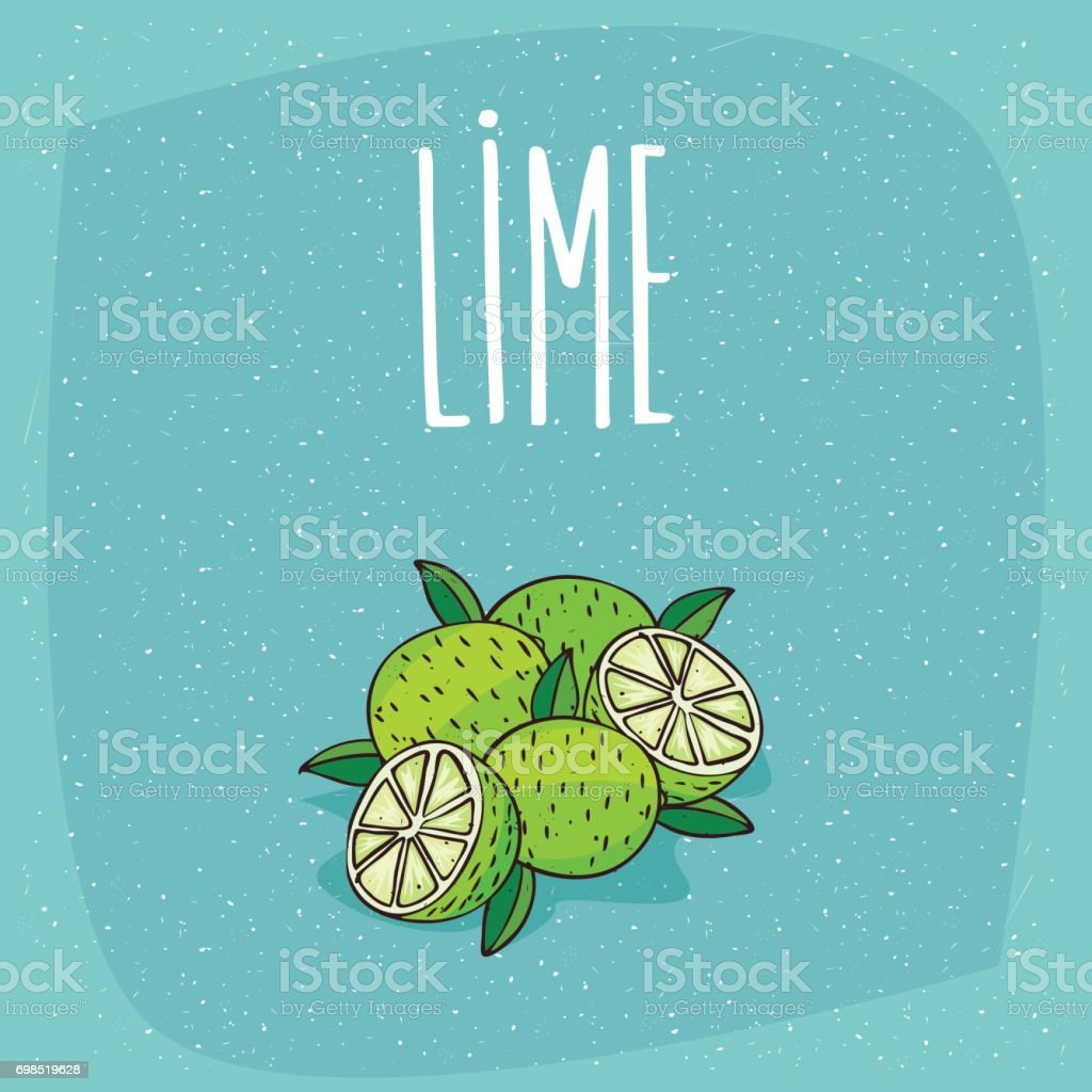 Isolated ripe lime fruits whole and cut vector art illustration
