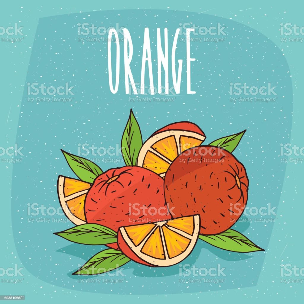 Isolated ripe oranges fruits whole and cut vector art illustration
