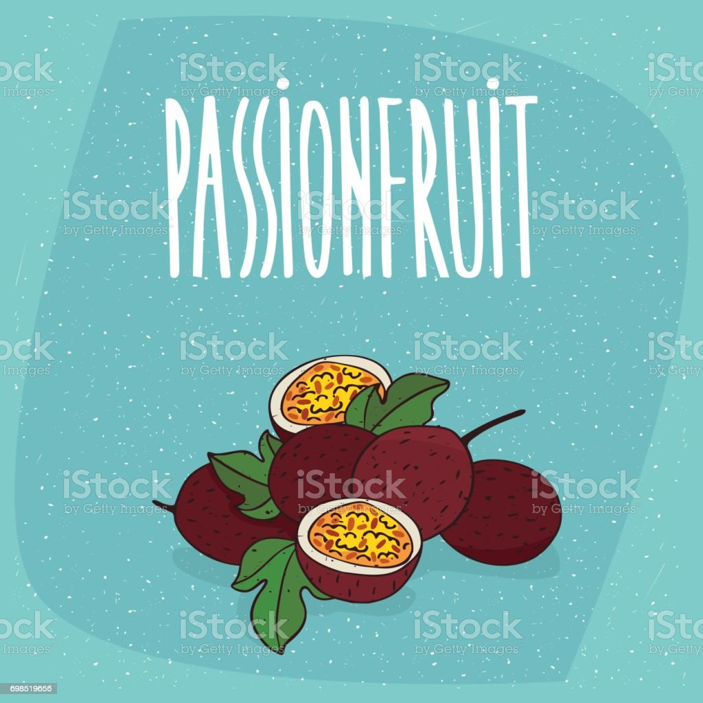Isolated ripe passion fruit or passionfruit vector art illustration