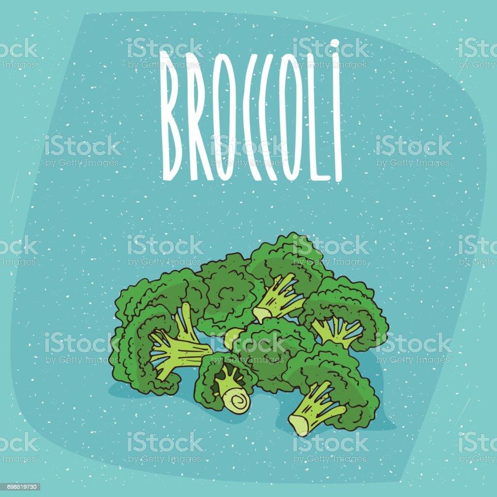 Isolated ripe vegetables broccoli stalks vector art illustration