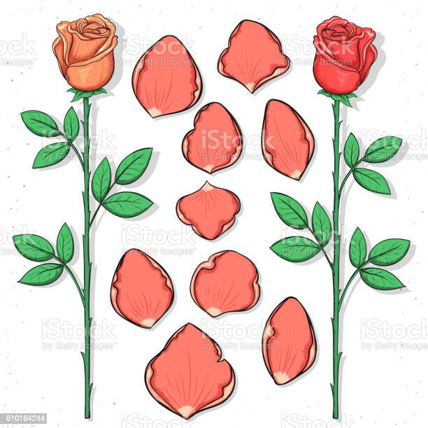 Isolated rose and petals handmade in sketch style sketch flower vector id510164244?b=1&k=6&m=510164244&s=612x612&h=cus9ygamk3nnygoprwpxzgmadxsxiq3  on7y8 cm7u=