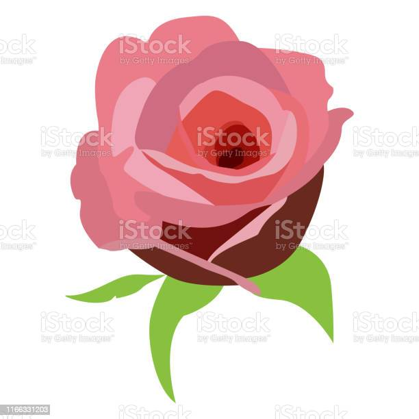 Isolated rose flower vector id1166331203?b=1&k=6&m=1166331203&s=612x612&h=nnbausemjl ahoavypxxo3hkgwqicg1bsmdubc4zn3o=