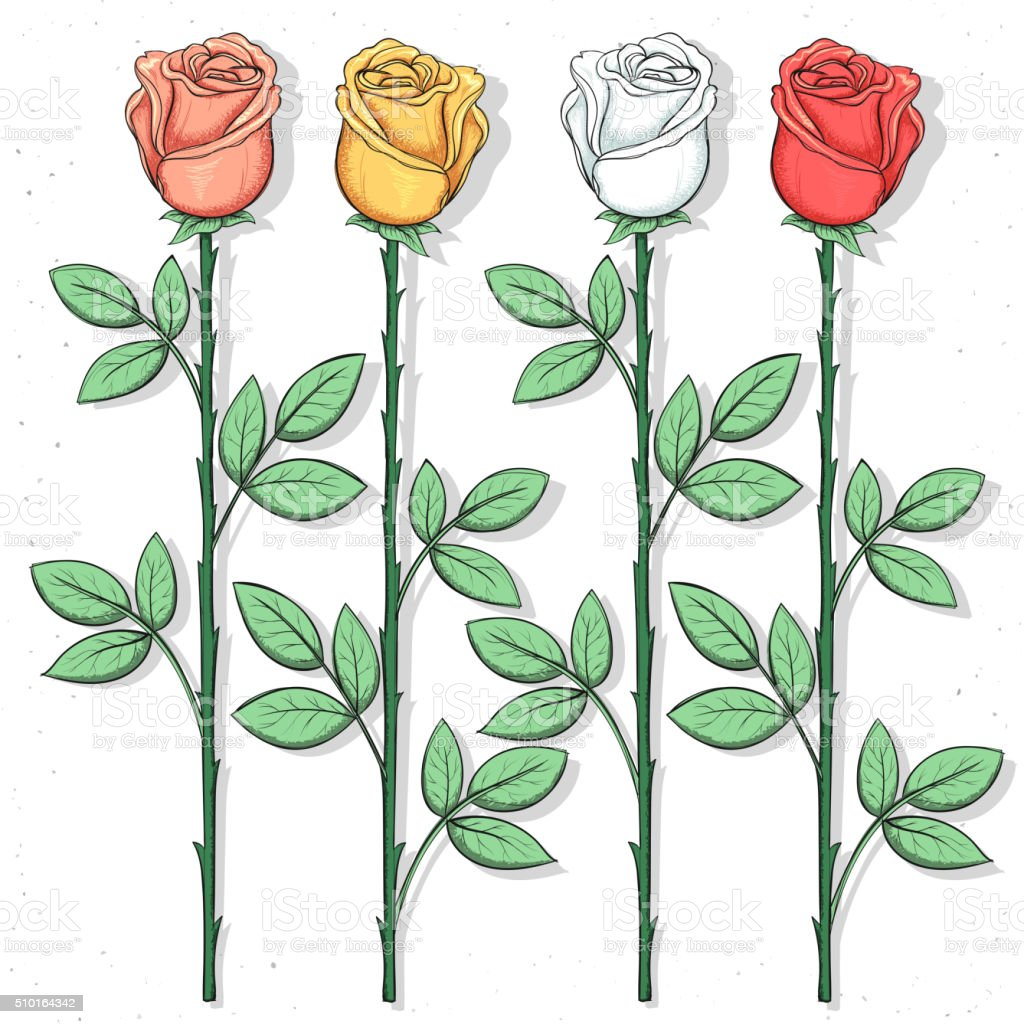 Isolated Roses Handmade In Sketch Style Sketch Of Color Flower Stock ...